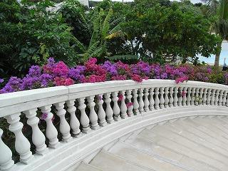 ブーゲンと階段.jpg
